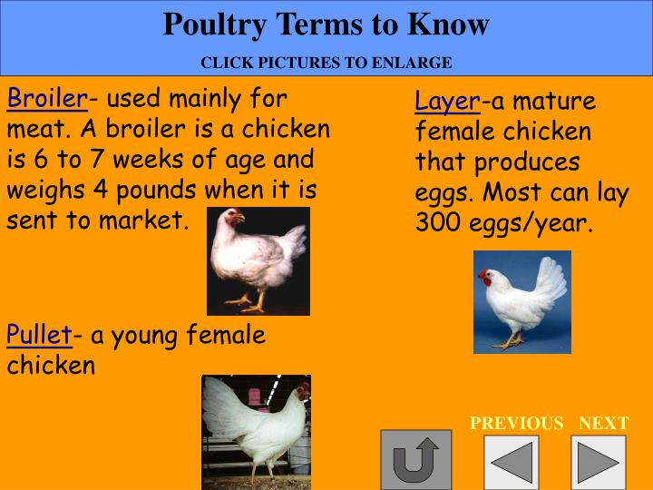 Poultry Terms to Know