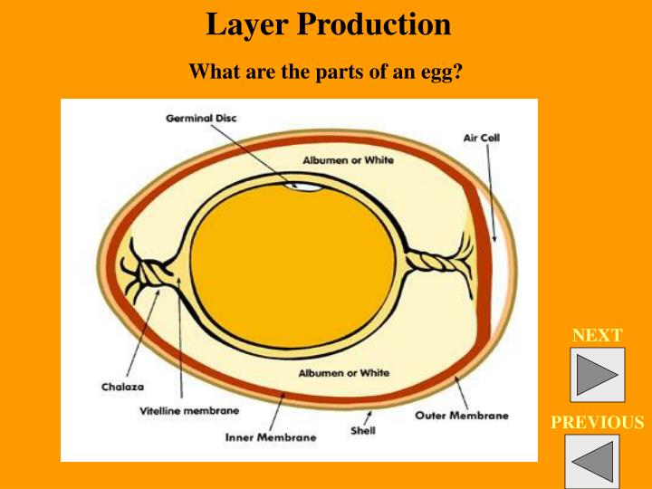 Layer Production