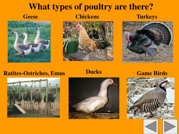 What types of poultry are there?