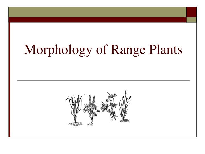Morphology of range plants