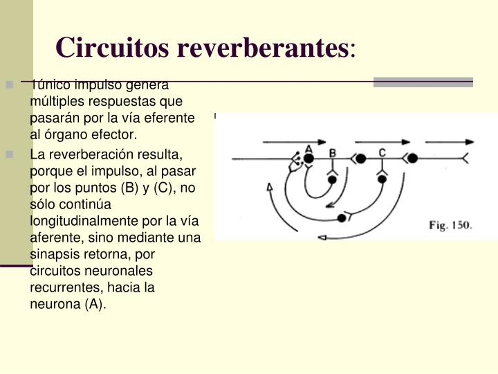 Circuitos reverberantes