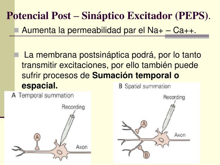 Potencial Post – Sináptico Excitador (PEPS)