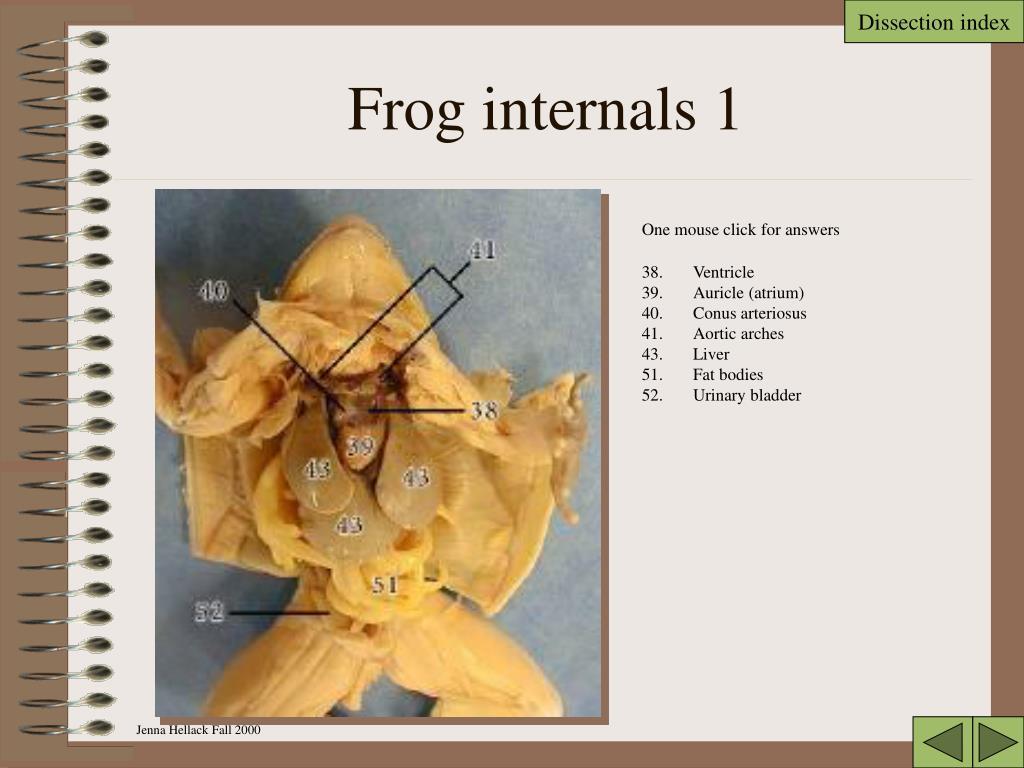 Frog internals 1