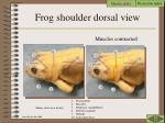 frog shoulder dorsal view