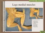 legs medial muscles