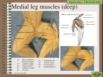 medial leg muscles deep