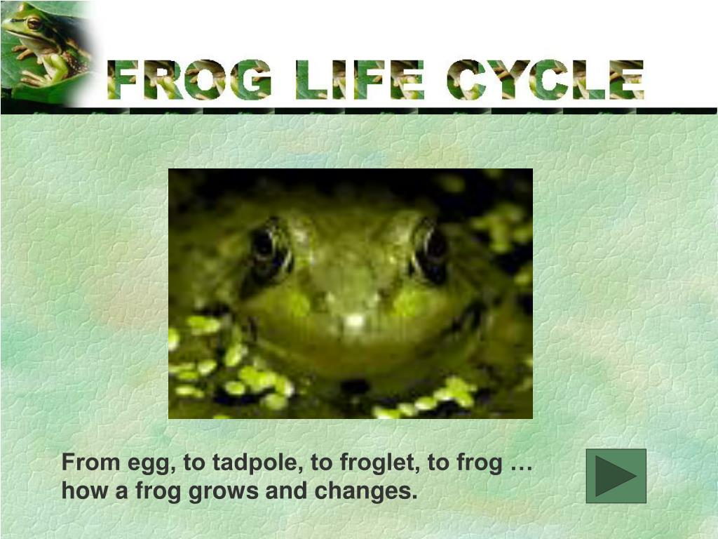 From egg, to tadpole, to froglet, to frog …