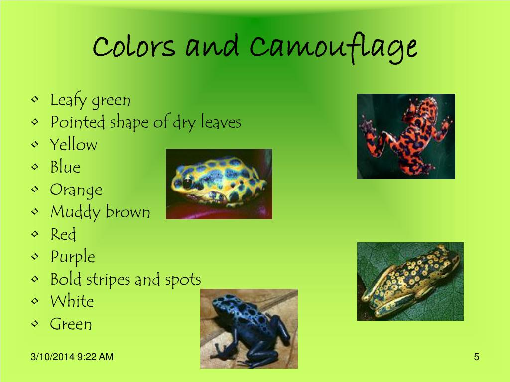 Colors and Camouflage