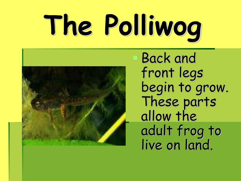 The Polliwog