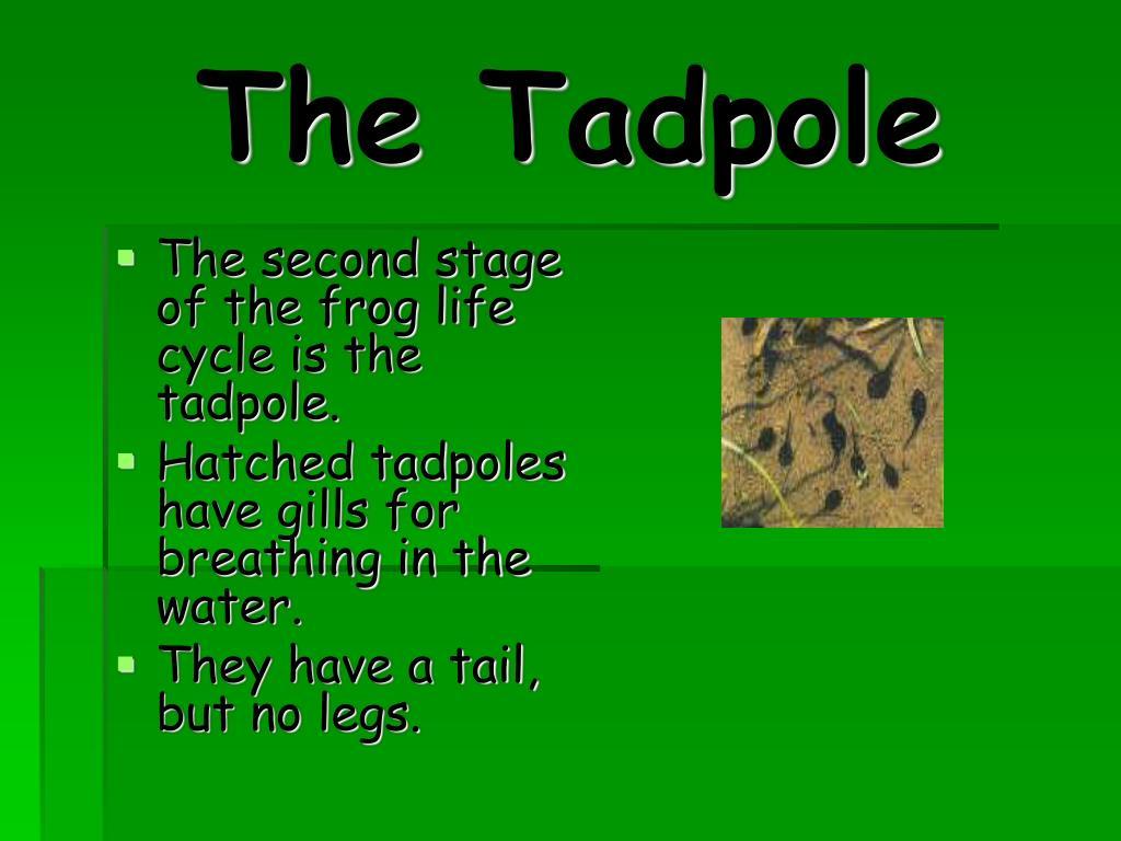 The Tadpole