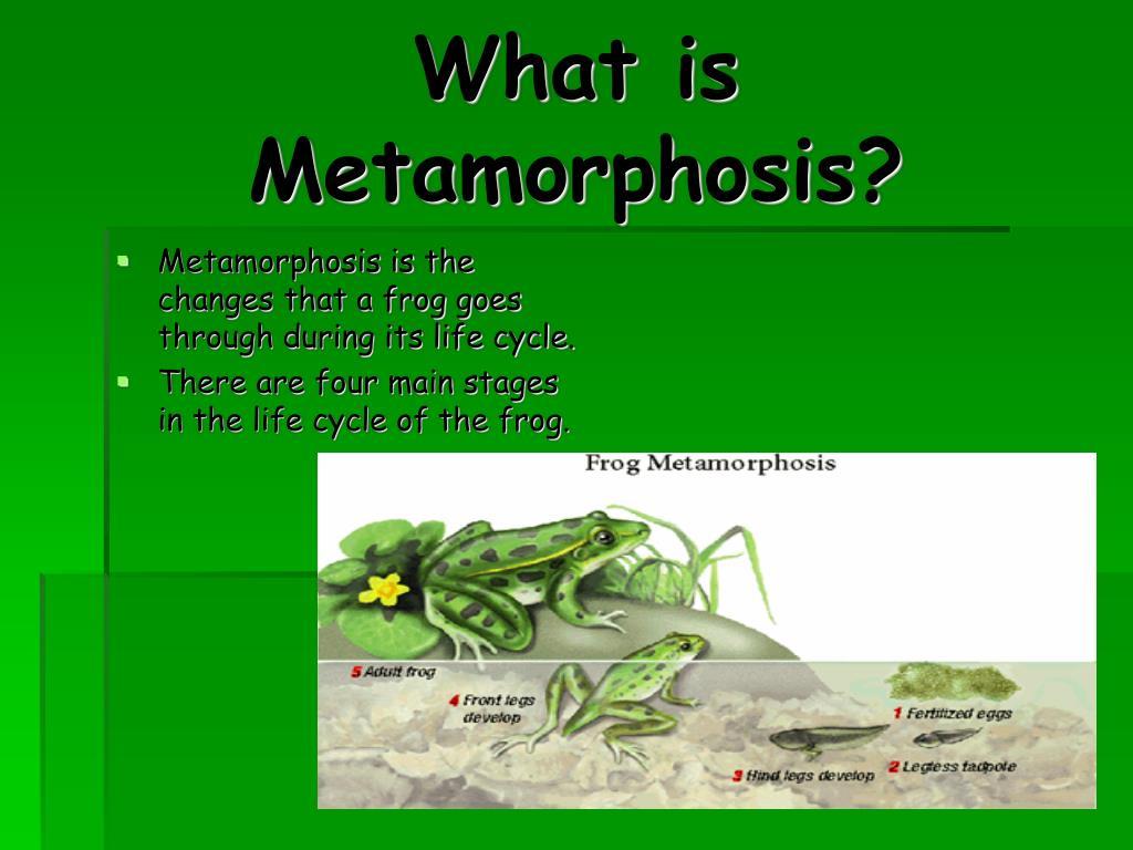 What is Metamorphosis?