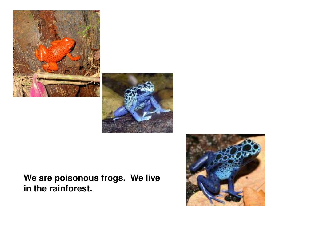 We are poisonous frogs.  We live