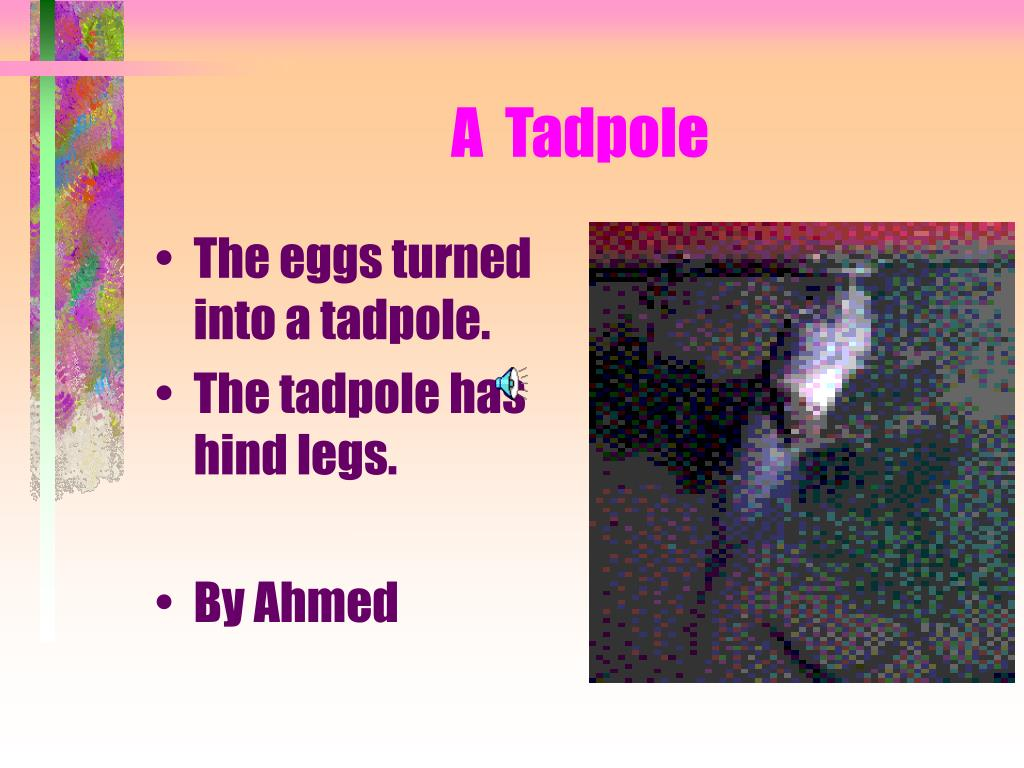 The eggs turned into a tadpole.
