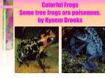 colorful frogs some tree frogs are poisonous by kyeem brooks