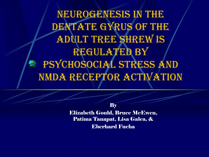 Neurogenesis in the