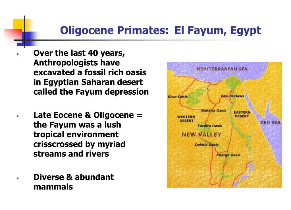 Oligocene Primates: