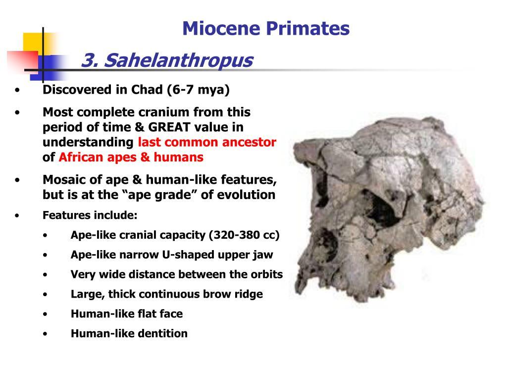 Miocene Primates