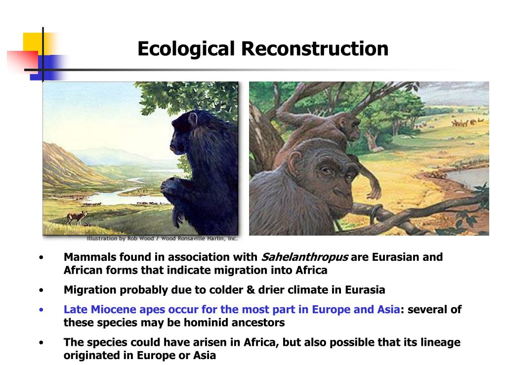 Ecological Reconstruction