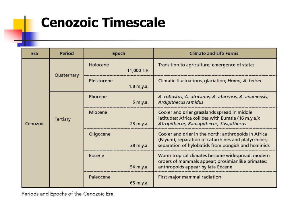 Cenozoic Timescale