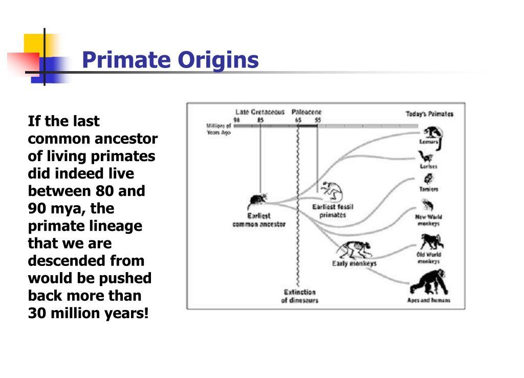 Primate Origins