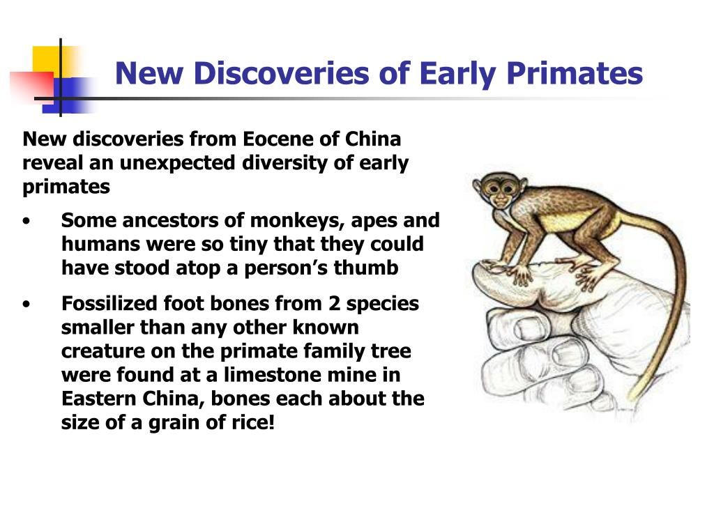 New Discoveries of Early Primates