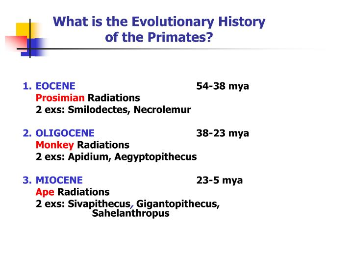 What is the evolutionary history of the primates3