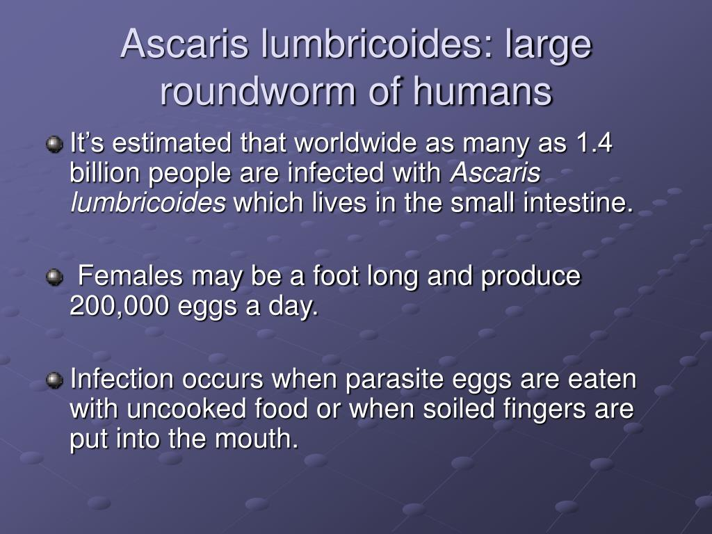 Ascaris lumbricoides: large roundworm of humans