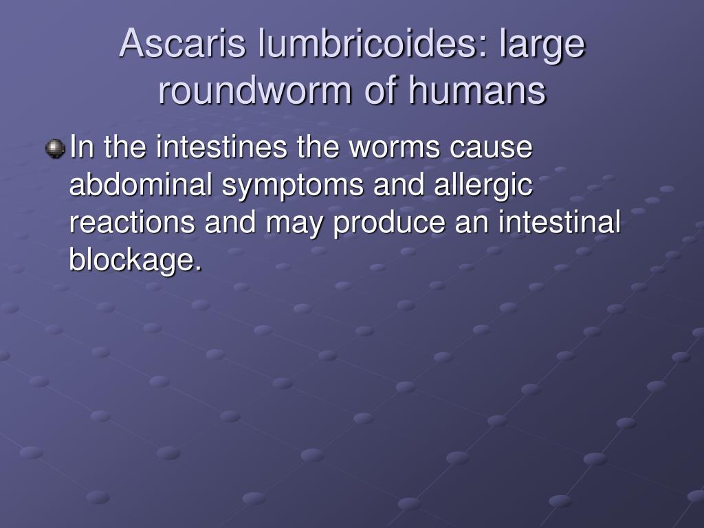 Ascaris lumbricoides: large roundworm of humans