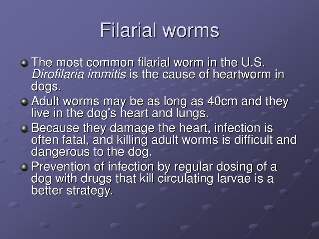 Filarial worms