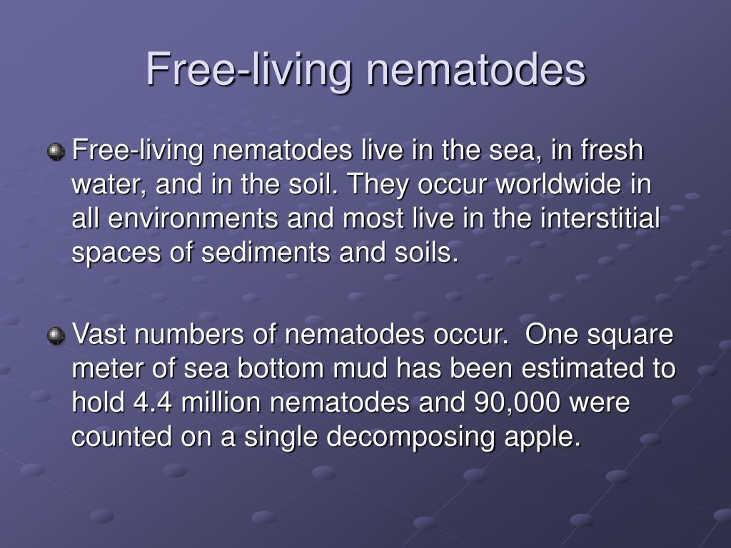 Free-living nematodes