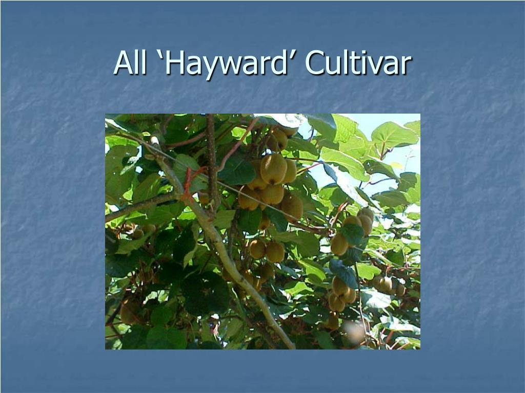 All 'Hayward' Cultivar