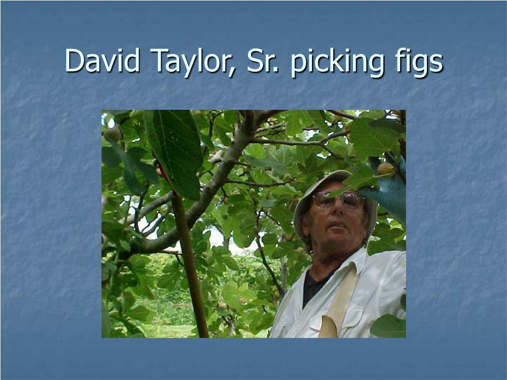 David Taylor, Sr. picking figs