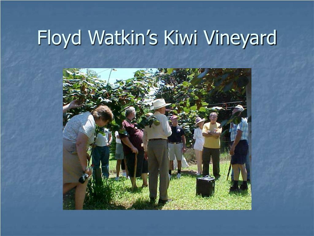 Floyd Watkin's Kiwi Vineyard