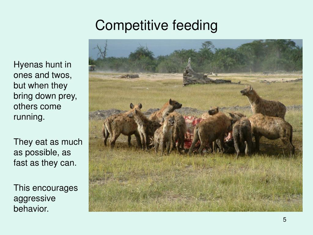 Competitive feeding