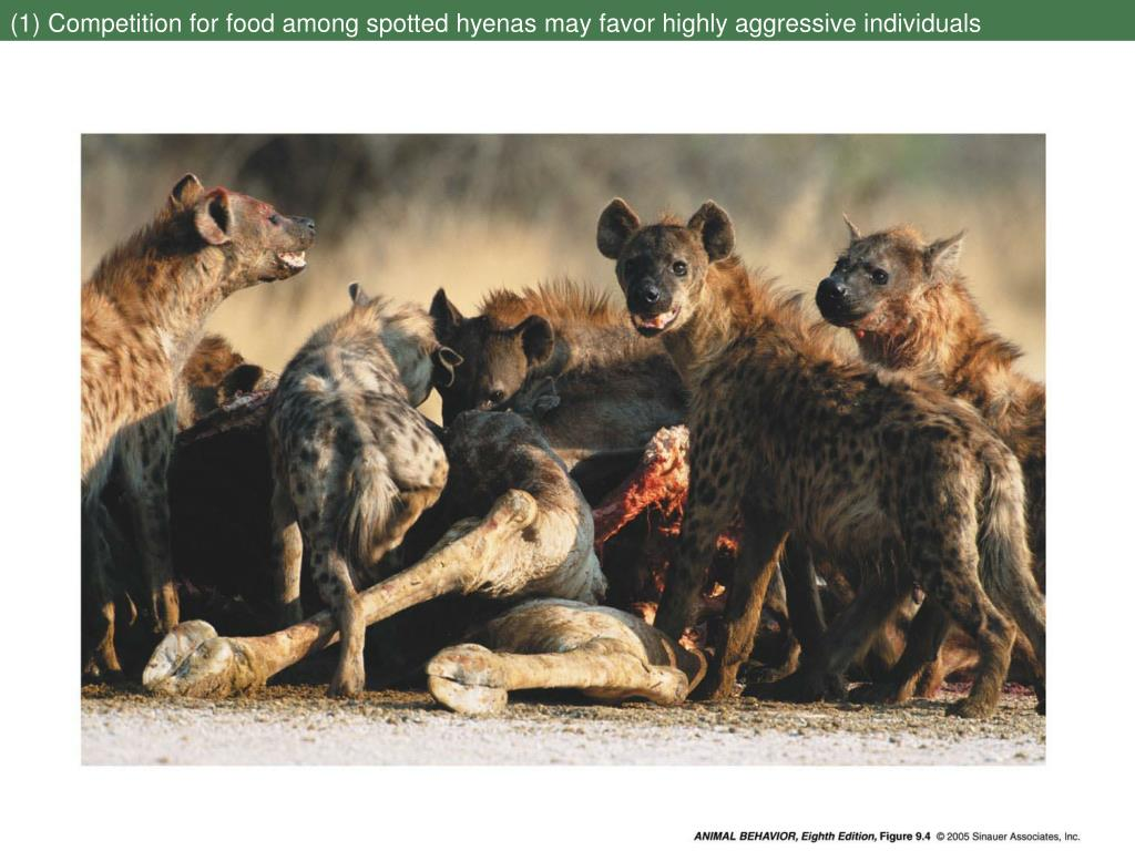(1) Competition for food among spotted hyenas may favor highly aggressive individuals