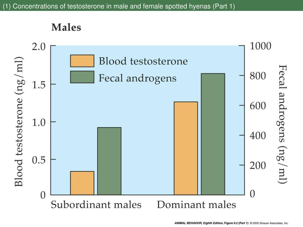 (1) Concentrations of testosterone in male and female spotted hyenas (Part 1)