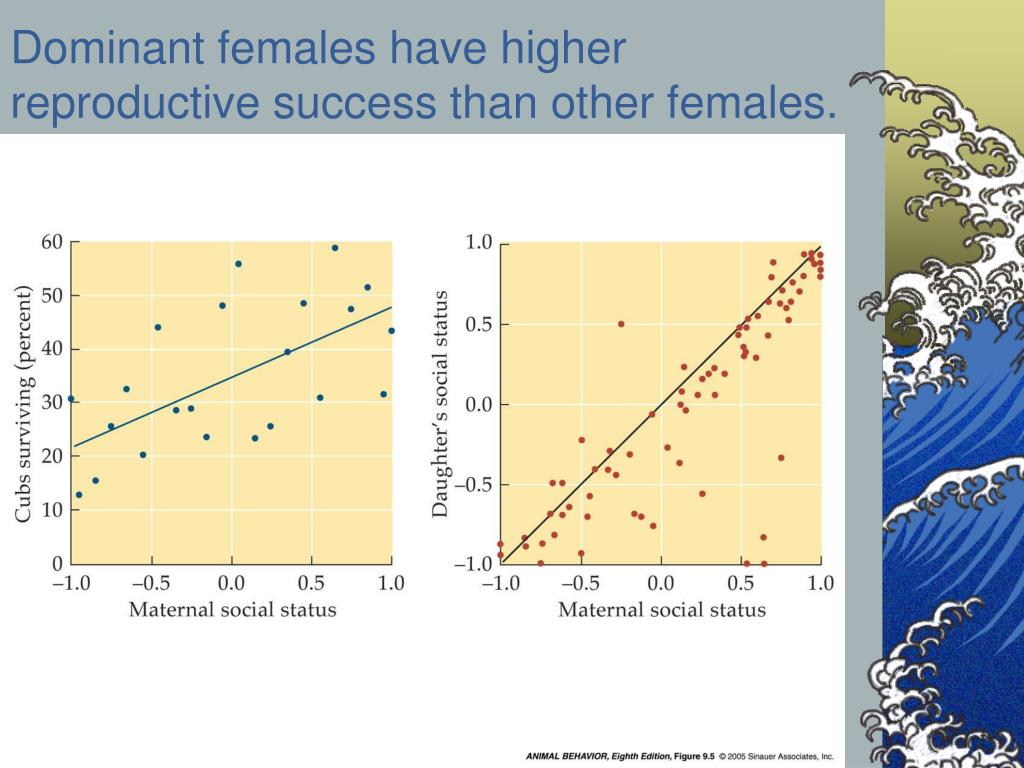 Dominant females have higher