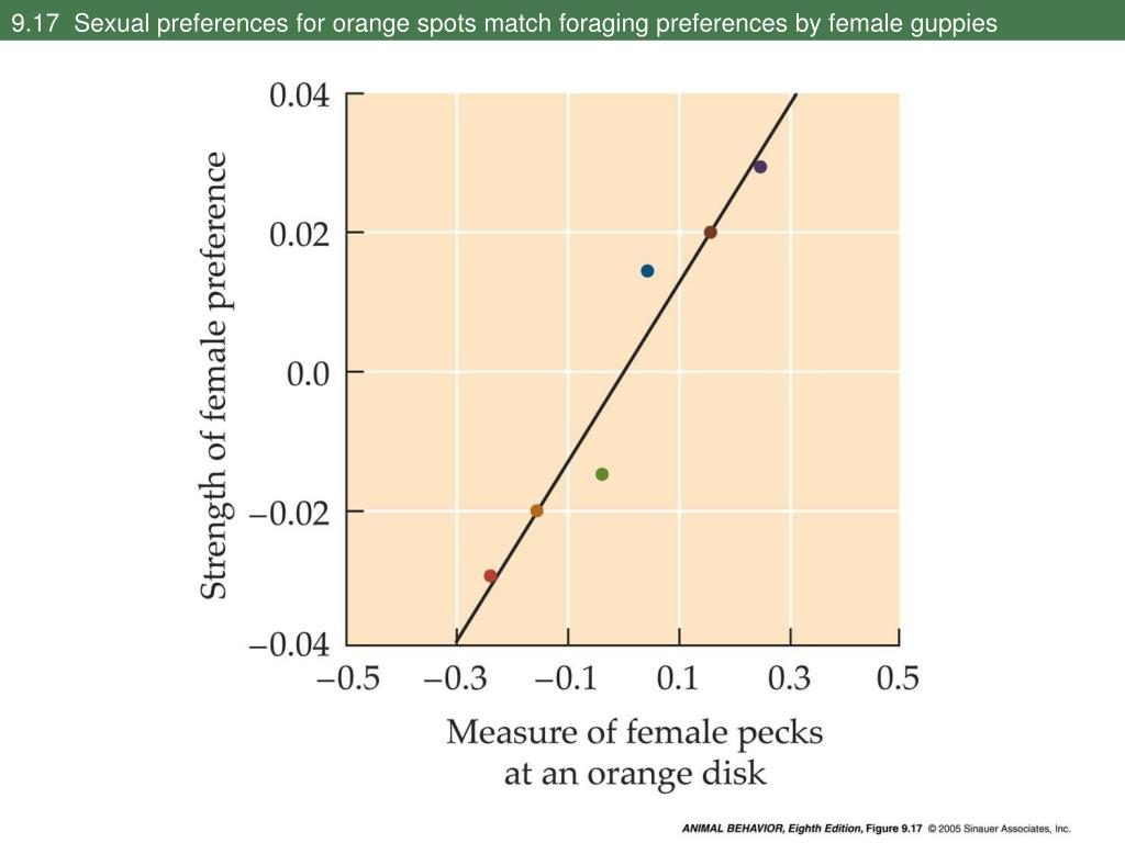 9.17  Sexual preferences for orange spots match foraging preferences by female guppies