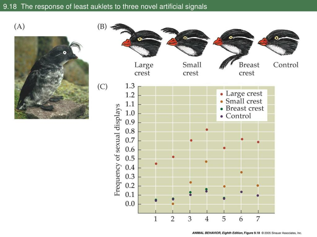 9.18  The response of least auklets to three novel artificial signals