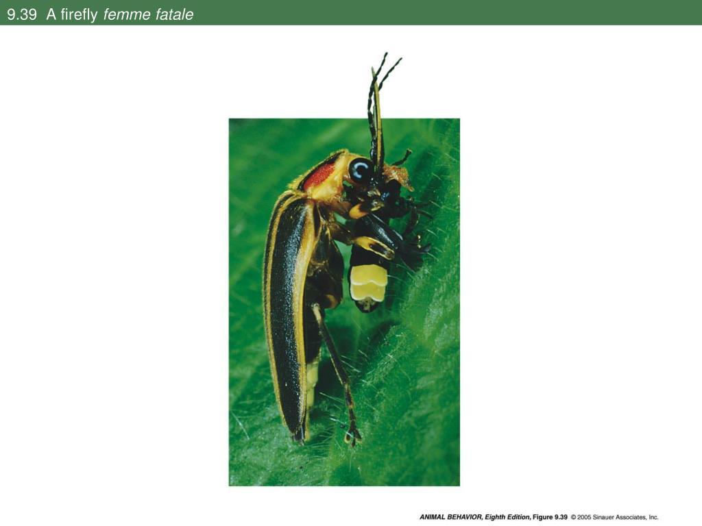 9.39  A firefly