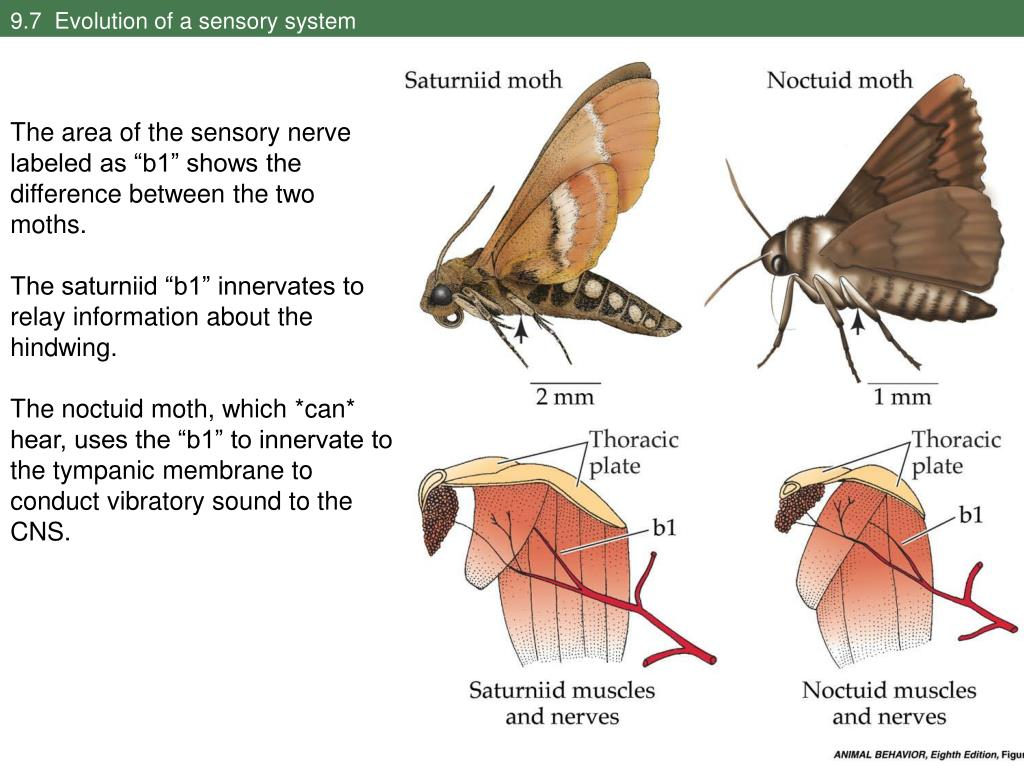 9.7  Evolution of a sensory system