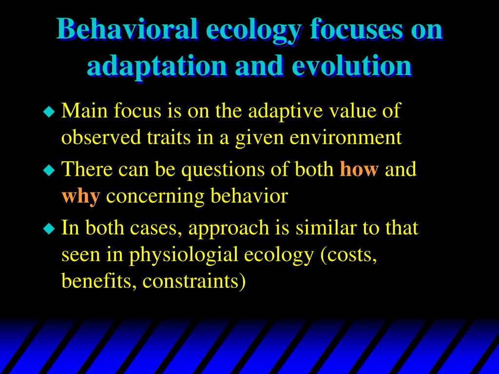 Behavioral ecology focuses on adaptation and evolution