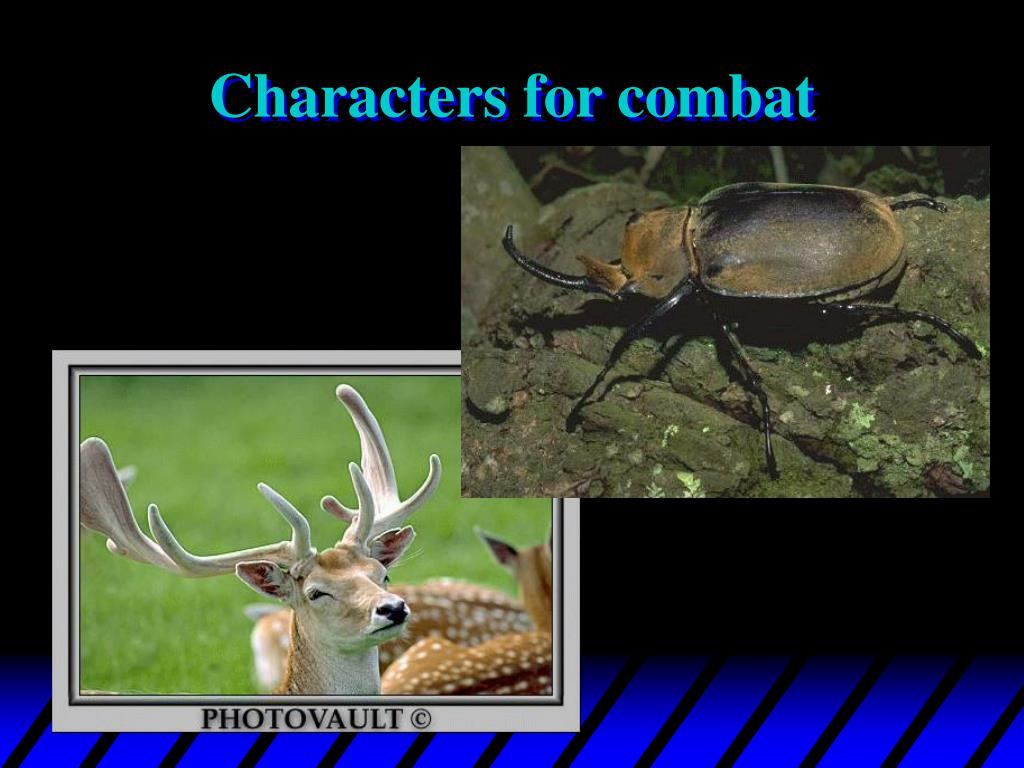 Characters for combat