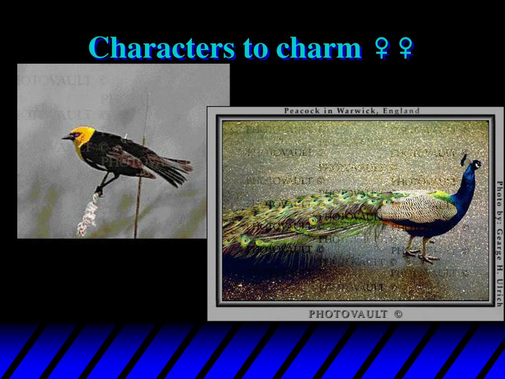 Characters to charm