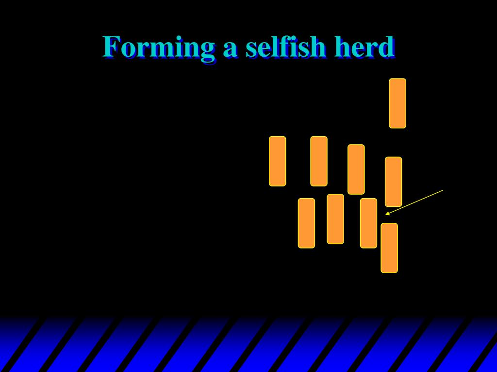 Forming a selfish herd