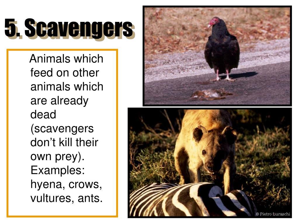 5. Scavengers