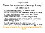 energy pyramid shows the movement of energy through an ecosystem