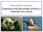heterotrophs consumers organisms that get energy directly or indirectly from plants