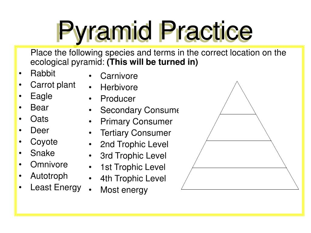 Place the following species and terms in the correct location on the ecological pyramid: