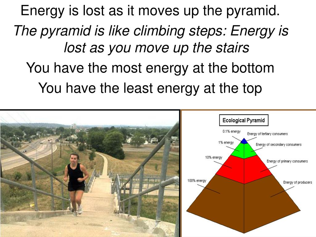 Energy is lost as it moves up the pyramid.